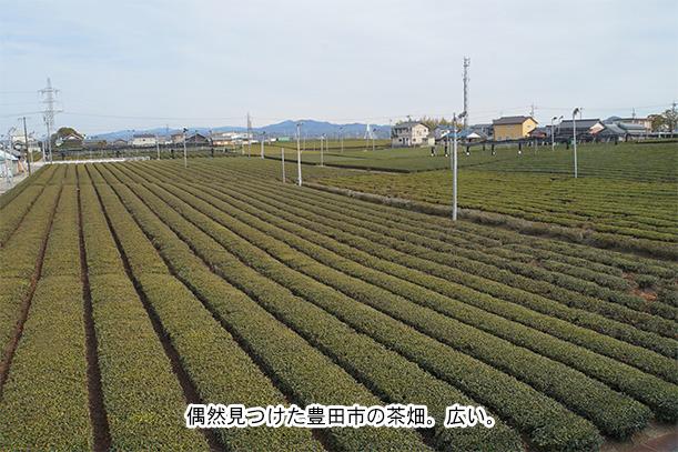 豊田市 茶畑
