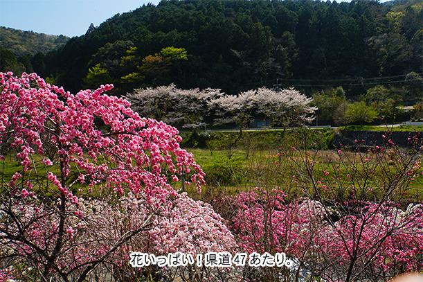 井伊谷川沿いの花