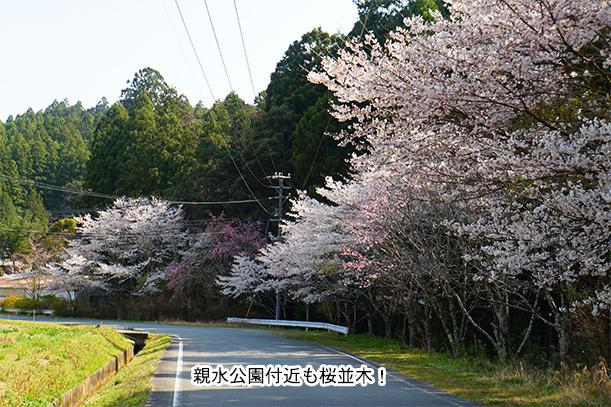 親水公園の桜並木