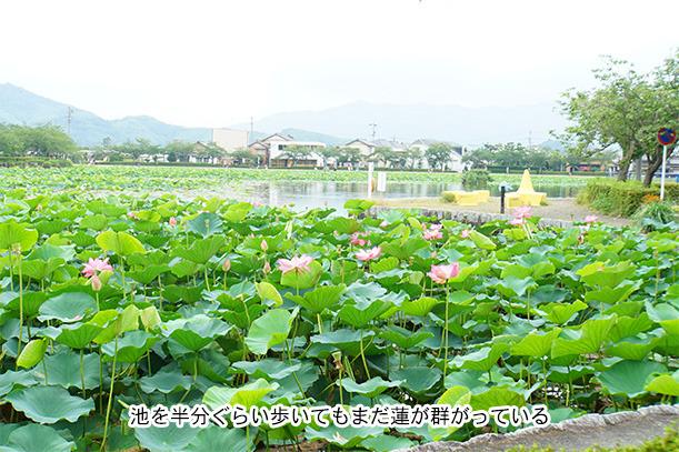 蓮華池公園