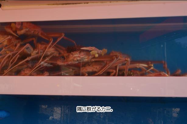 28-16端に群がる蟹
