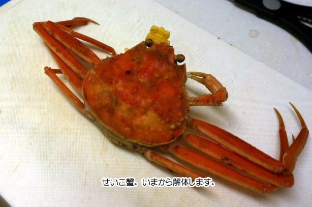 28-18まな板より小さいせいこ蟹