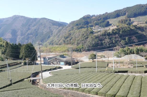 32-7大井川沿いにある茶畑