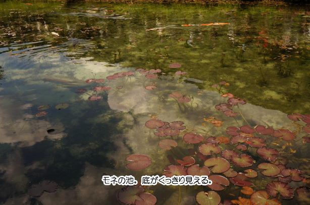 39-1モネの池