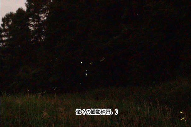 売木村の蛍.jpg