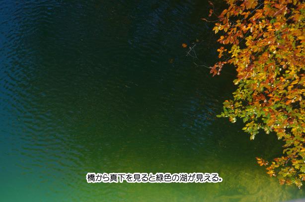 九頭竜湖の紅葉 62-3