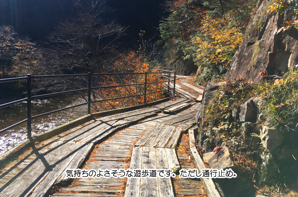 川浦渓谷の遊歩道.jpg