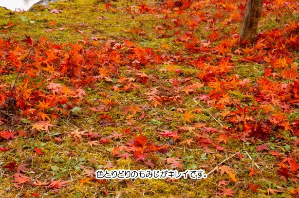 淡墨桜の周辺