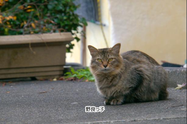 うすずみ四季彩館の近くで猫を発見