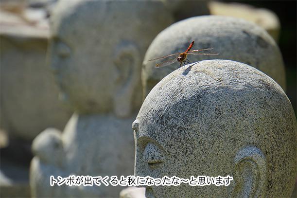 福井県御誕生寺