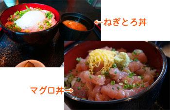 熱海で食べたマグロ丼とネギトロ丼
