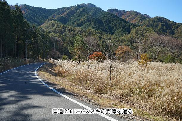 山道の中にススキ畑が