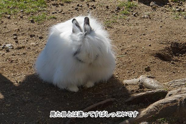牧歌の里 ウサギ