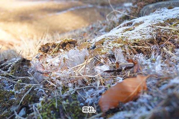 牧歌の里 霜柱
