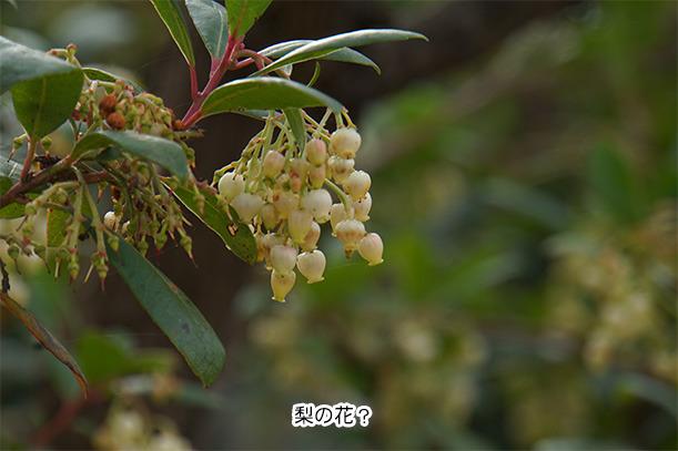 デンパーク安城 世界の梨庭園