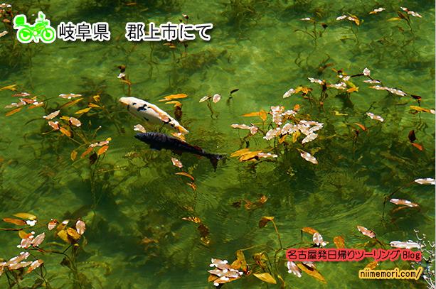 名古屋発日帰りツーリングBlog表紙107