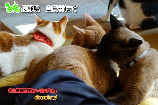 名古屋発日帰りツーリングBlog表紙82