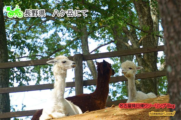 名古屋発日帰りツーリングBlog表紙84